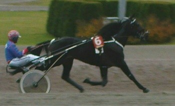 Cash or Credit Solvalla